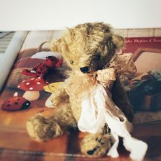 toricotte bear