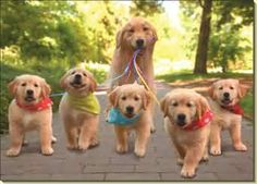 Mama and pups out for a walk!