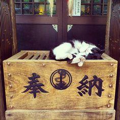 nihon-daisuki: #日本#東京#神社#賽銭箱#奉納#猫#ネコ#