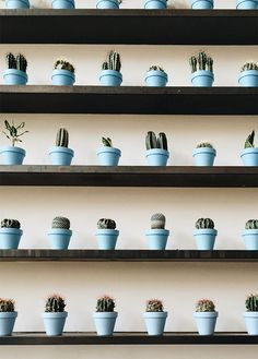 30 Stunning Ways To Wall Display House Plants With Cactus