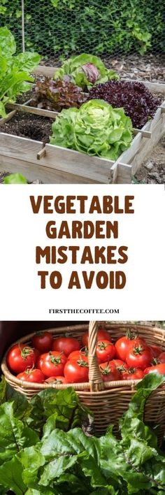 Vegetable Garden Mistakes to Avoid as a New Gardener - First The Coffee Starting A Vegetable Garden, Vegetable Garden For Beginners, Gardening For Beginners, Gardening Tips, Container Gardening Vegetables, Planting Vegetables, Vegetable Gardening, Growing Vegetables, Metal Raised Garden Beds