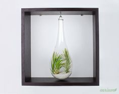 Framed Airplant Terrarium Decorate your walls with this minimalist framed… Green Design, Decor, Wall, Plant Gifts, White Frame, Air Plants, Frame, Home Decor, Etsy