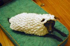 Pavlov dressed up as a sheep. Cool crochet or knit sheep costume for your dog. Funny Dogs, Funny Animals, Cute Animals, Funny Sheep, Animal Jokes, Funny Humor, Costume Chien, Lamb Costume, Puppy Costume