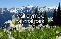 Visit Olympic National Park | Bucket List