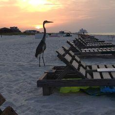Sunrise on Pensacola Beach, FL :)