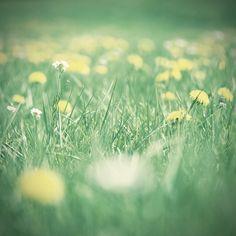 #grass  Fresh cut grass