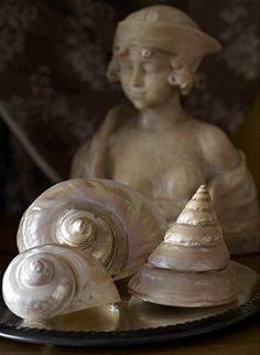 Pearly shells and plaster bust