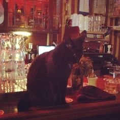 Gatto alcolista in bruin café ad Amsterdam