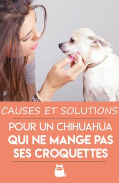 Le Chihuahua, Afin, Dogs, Animals, Cute Puppies, Dogs And Puppies, Funny Chihuahua, Behavior, Rat Dog