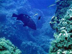 Tauchurlaub 2019 in Kreta Greece Holiday, Crete Greece, Snorkelling, Underwater, Diving, Boulder Landscape, Scuba Diving