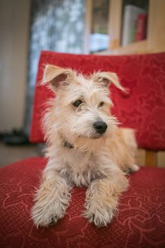 Desire to Inspire: Monday's pets onfurniture