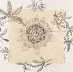 Marta Chirino – The Society of Botanical Artists