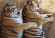 The Daily Cute: So Much Spooning