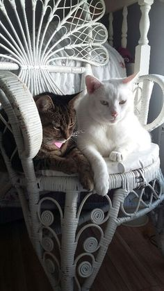 Lucy and Casey enjoying a quiet Sunday afternoon #cat