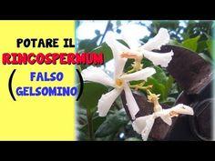 Natura è Bellezza - YouTube Garden, Youtube, Home, Garten, Lawn And Garden, Gardening, Outdoor, Youtubers, Gardens