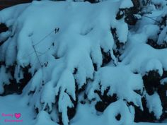 So much snow. http://pumpkinemilysmiles.blogspot.com/2014/02/trees-and-snow.html