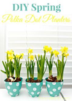 DIY Spring Polka Dot Planters by Mom4Real. So cute!