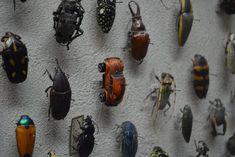 Entomology joke #105