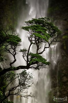 Devils Punchbowl Waterfall, Arthur's Pass National Park, New Zealand. Thomas Boscato
