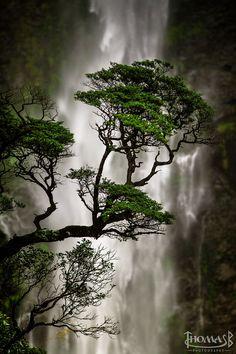 Devils Punchbowl Waterfall, Arthur's Pass National Park, New Zealand. Thomas Boscato