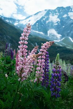 On the iconic Tour du Mont Blanc trek, you are treated to pristine mountain scenery. There are so many reasons why you should hike the Tour du Mont Blanc. Hiking Photography, Nature Photography, Mont Blanc Trek, Hiking Images, Nepal Mount Everest, G Adventures, Great Shots, France Travel, European Travel