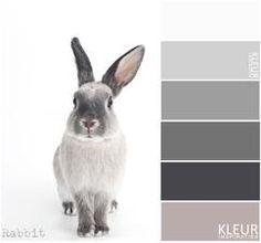 KONIJN - Kleurenpalet grijs met oud roze, mooie kleuren combinatie