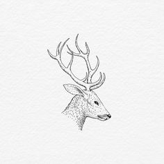 #Reindeer #White #Antler #Sketch Line art, Graphics, Black and white, Font - Photo by @bachtz - Follow #extremegentleman for more pics like this!