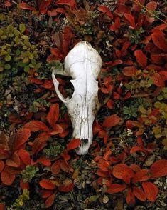 Amazing colors love the skull Nature is God Vanitas, Olgierd Von Everec, Sublime Creature, Kreative Portraits, Yennefer Of Vengerberg, The Ancient Magus Bride, Photo Libre, Aradia, Necromancer
