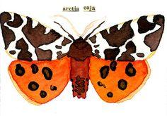 aceo, watercolor, Great Tiger Moth