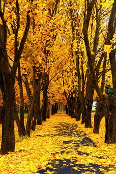 by Igor Poluchin / scenery Yellow Aesthetic Pastel, Rainbow Aesthetic, Aesthetic Colors, Aesthetic Pictures, Yellow Photography, Nature Photography, Wallpaper Paisajes, Autumn Scenes, Yellow Walls
