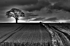 Black and white photo techniques