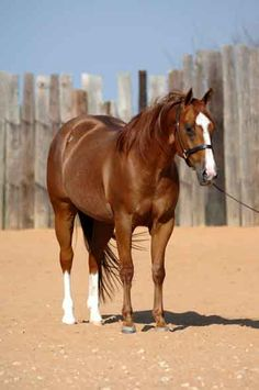 strength and gentleness~ combine in a horse