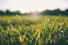 Ako zavlažujete svoj trávnik vy?  https://www.pvmsystem.sk/riadenie-zavlazovania-1