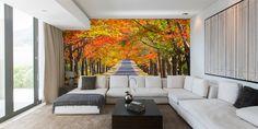 'Memorial Avenue in Autumn, Mount Macedon, VIC' Removable Wallpaper