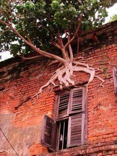 Una ventana con raíces