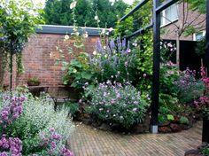 Small romantic urban garden with lots of flowers. Kleine romantische tuin.
