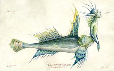A Blue Finned Mer-folk illustrated in the Faery Fieldguide from the Spiderwick Chronicles.
