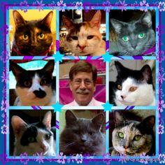 Kitties Blue wishing their dad a Happy Birthday !