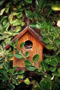 Birdhouse in the Garden!