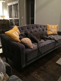 9 by novogratz tufted sofa sleeper ii - Grey Tufted Sofa