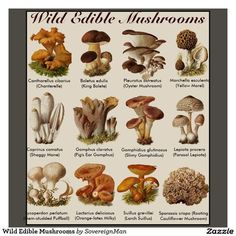 Hydroponic Gardening - Want to grow your own wild mushrooms without spending a ton of money? Check out our six easy steps and get started growing your own mushrooms! Hydroponic Growing, Hydroponic Gardening, Hydroponics, Organic Gardening, Aquaponics Fish, Gardening Hacks, Garden Mushrooms, Edible Mushrooms, Stuffed Mushrooms