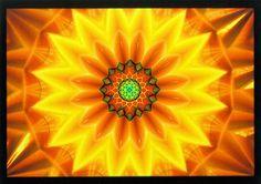 Essence of Flower
