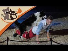 Hundetricks- Das Supertalent-Gewinner Lukas Pratschker auf der DOGLIVE 2015
