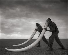 conserving african wildlife through photography: Nick Brandt