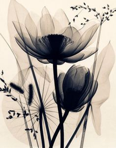 Evive Designs Lotus and Grasses by Judith Mcmillan Graphic Art