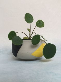 Indoor Plants | Perfectly chosen painted clay pot & Philodendron
