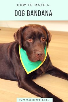 DIY sewing projects: How to make the perfect dog bandana: in a few easy steps…