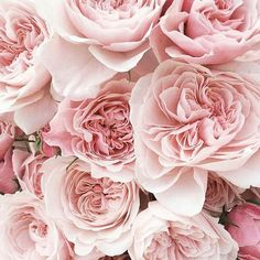 You look lovely today Flowers Nature, Fresh Flowers, Beautiful Flowers, Pink Peonies, Pink Roses, Flower Phone Wallpaper, Beautiful Flower Arrangements, Art For Art Sake, Pink Aesthetic