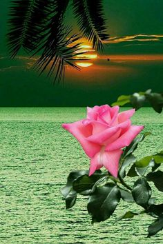 Beautiful Flowers Wallpapers, Beautiful Rose Flowers, Beautiful Nature Wallpaper, Amazing Flowers, Beautiful Images, Beautiful Landscape Photography, Beautiful Landscapes, Nature Photography, Moon Pictures