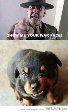 The war face of a Rottweiler puppy...grrr!